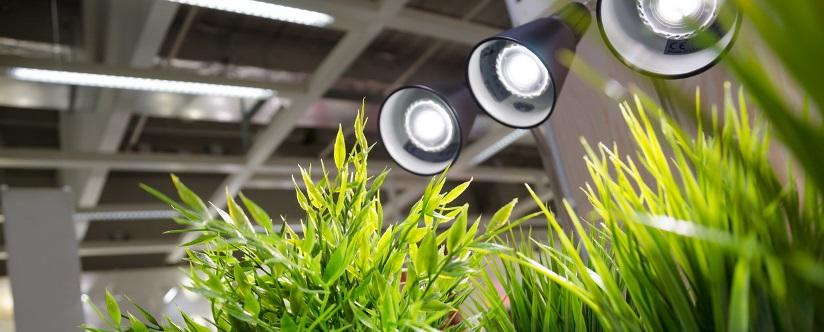 Виды фитоламп для роста растений